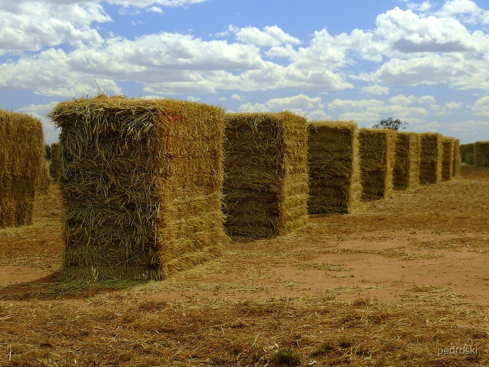 Drying the hay by pedroski