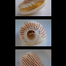 Shell Trio by Jo  Young