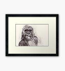 Bemused Gorilla Girl Framed Print