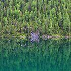 Trees at Lake Braies  by Yair Karelic