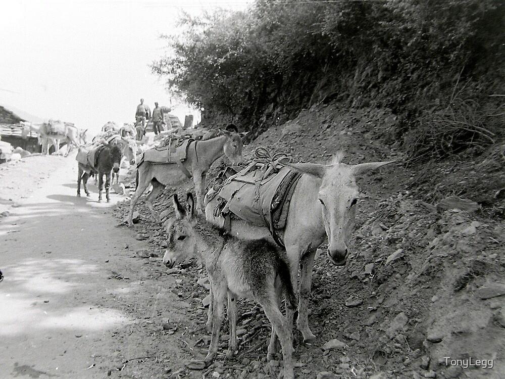 Pack animals -- india 89 by TonyLegg
