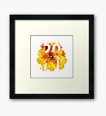 Flower 2011 Framed Print