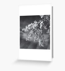 Poplar Branches in Black and White Greeting Card