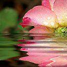 Rose Tears by Jonicool