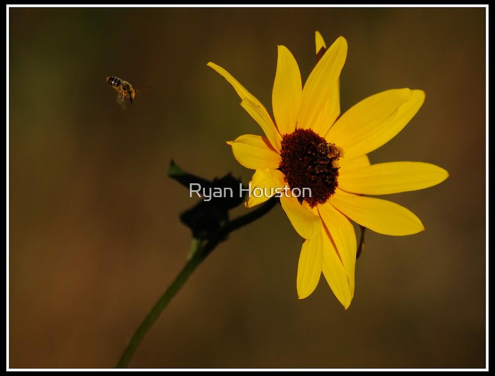Honeybees & Sunflower by Ryan Houston