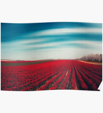 1000001 TULIPS Poster