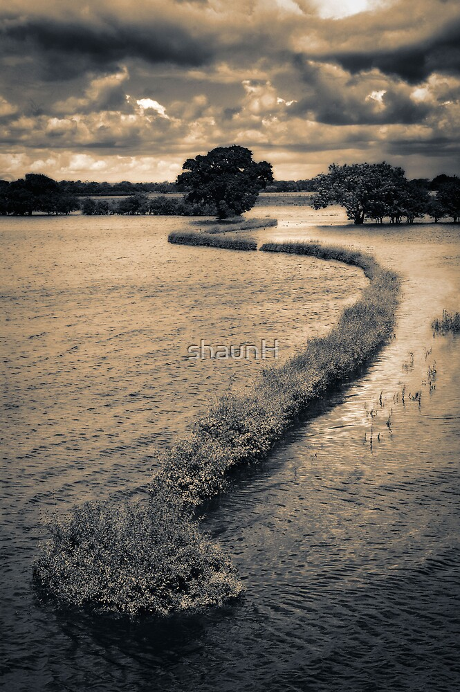 Flooded Field by shaunH