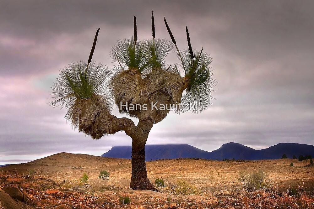 1445 The Grass Tree by Hans Kawitzki