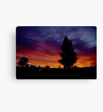 Sunset Pine Canvas Print