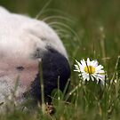 Wake up and smell the daisies! by LisaRoberts