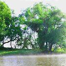 Peppercorn waters by Penny Kittel