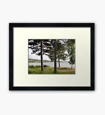 Four Trees by the Lake Framed Print