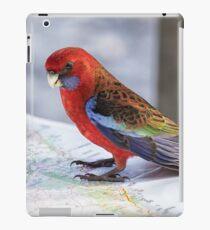 Crimson Rosella, NSW Australia iPad Case/Skin
