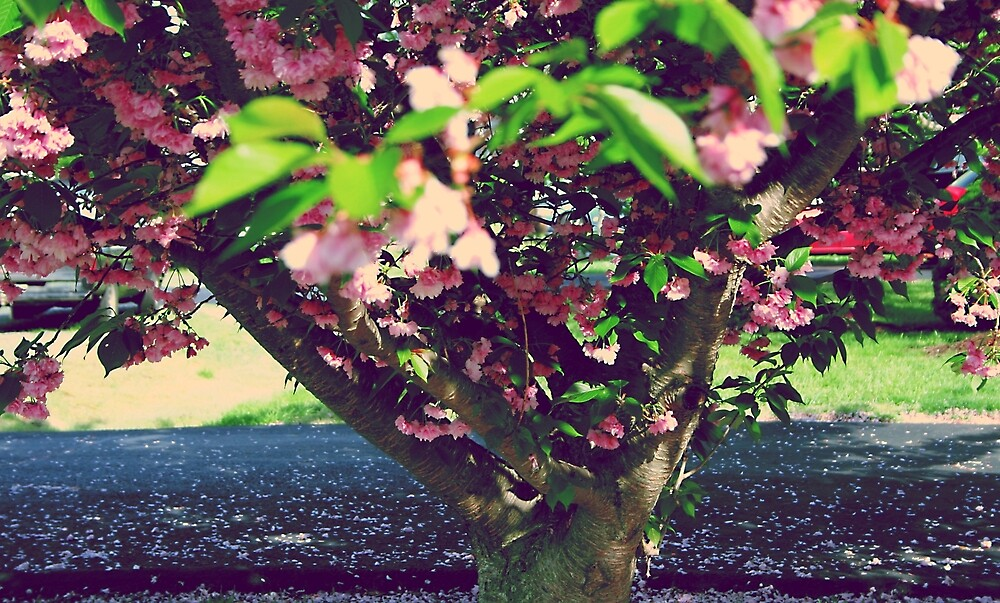 """""""Evidence of Spring"""" by theComplex"""