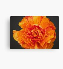 Aflame2 Canvas Print