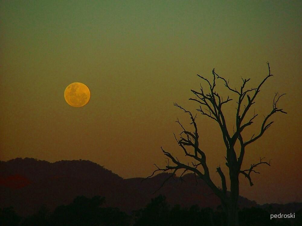 Mudgee Moon by pedroski