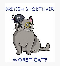 British Shorthair - worst cat? Photographic Print
