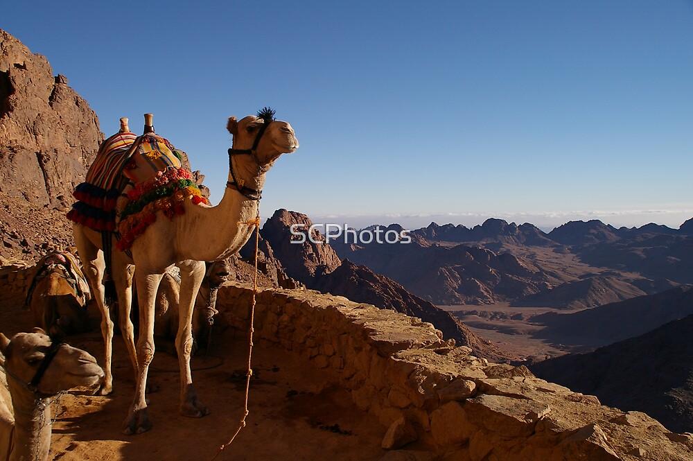 Mt Sinai Sunrise by SCPhotos