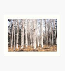 Birch Forest, Trees of Reason Art Print