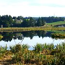Sinclair Wetlands - Waihola-Waipori - Otago New Zealand by AndreaEL
