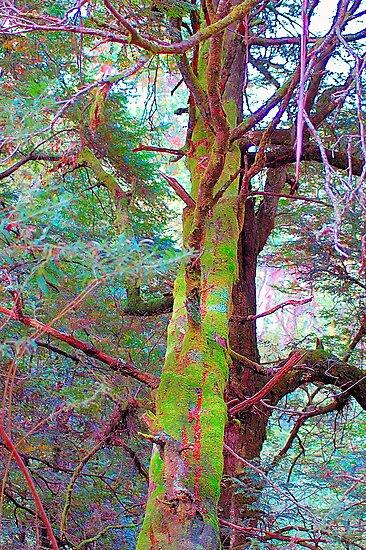 Psychedelic RainForest Series # 6 - Yarra Ranges National Park , Marysville Victoria Australia by Philip Johnson