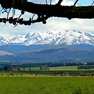 The Grazers View.. Mossburn Dairy Farm - NZ by AndreaEL