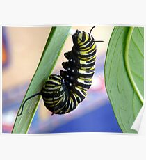 Instar! - Extraordinary Transformation! - Monarch Caterpillar - NZ  Poster