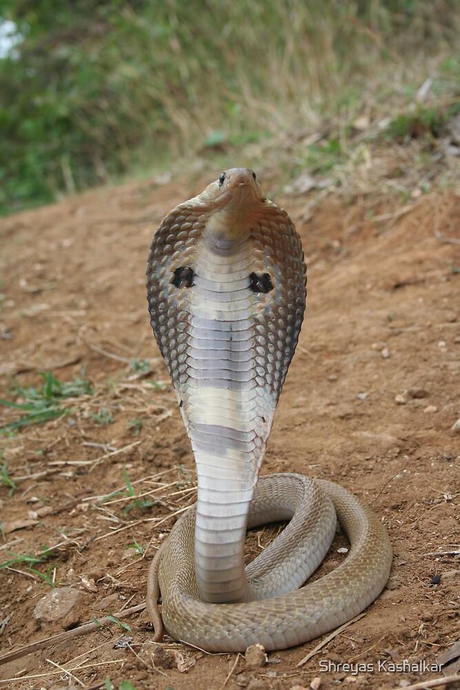 Quot Indian Spectacled Cobra Naja Naja Quot By Shreyas Kashalkar