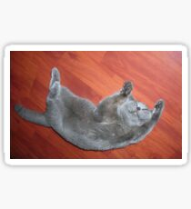 British blue cat Sticker