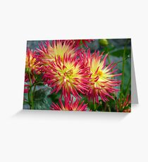 The Meaning of Variety... - Dahlia Blooms - NZ Greeting Card