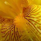 Inner Beauty! - Iris Flower - NZ by AndreaEL