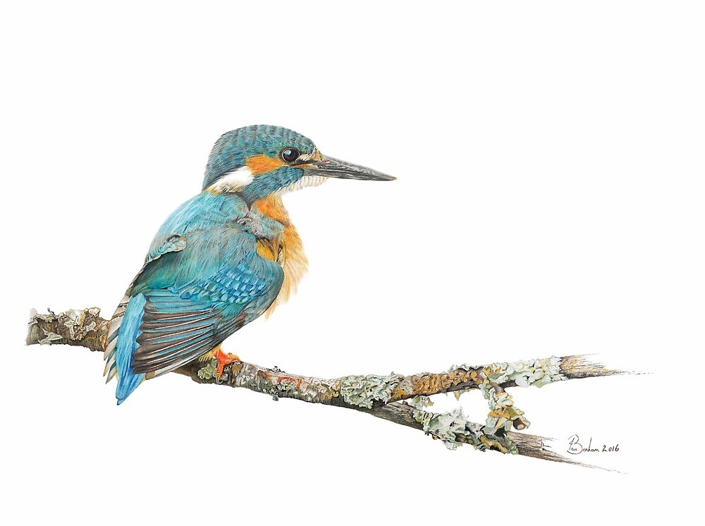 Kingfisher by 1a1n