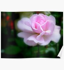 Forever Yours...Light Pink Rose - NZ Poster