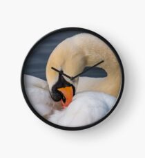 Mute swan Clock