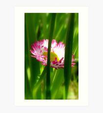 Make way Pink Bloom Peeking Through! - Wild Daisy - NZ - Southland Art Print