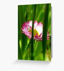 Make way Pink Bloom Peeking Through! - Wild Daisy - NZ - Southland Greeting Card