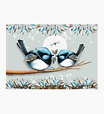 Blue Wrens Photographic Print