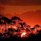 Sunrise & Sunset by Trish Meyer