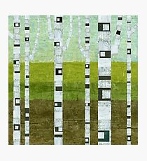 Summer Birches Photographic Print