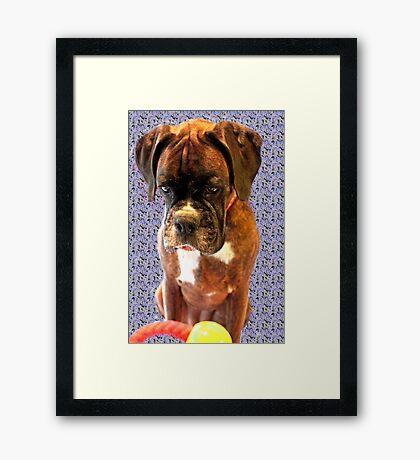 Feeling Blue - Boxer-Hunde-Serie Gerahmter Kunstdruck