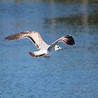 Seagull In Flight by Cynthia48
