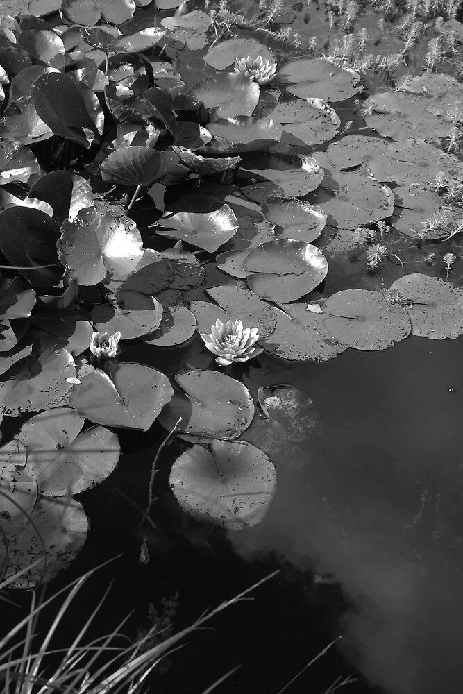 Lillies in shadow by Vanessa Combes