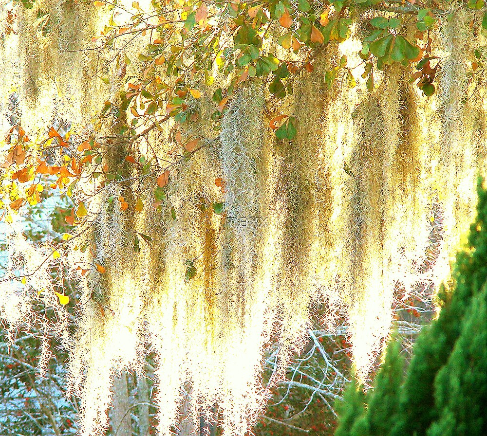 warm moss by maxx