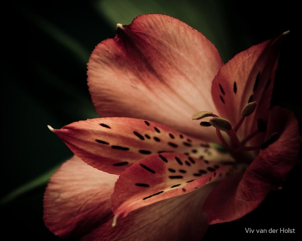 Grasping at light by Viv van der Holst
