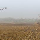 Morning flight by Manon Boily