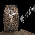 Night Owl  by CarolM