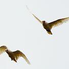 Flight Squadron by Wildpix
