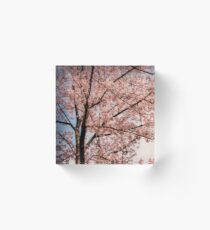 Cherry Blossom Tree Acrylic Block