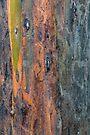 Bark 5 by Werner Padarin
