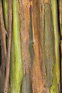 Green Bark 3 by Werner Padarin
